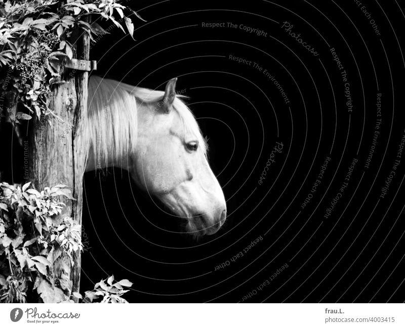 A horse Animal Day Animal portrait Farm Horse Head