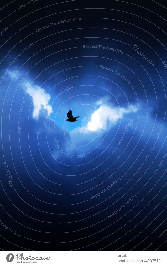 Loophole l little bird, fly to helgiland.... Bird Crow Raven birds raven Clouds Clouds in the sky Cloud cover cloudy Cloud formation Movement cloudy sky Sky
