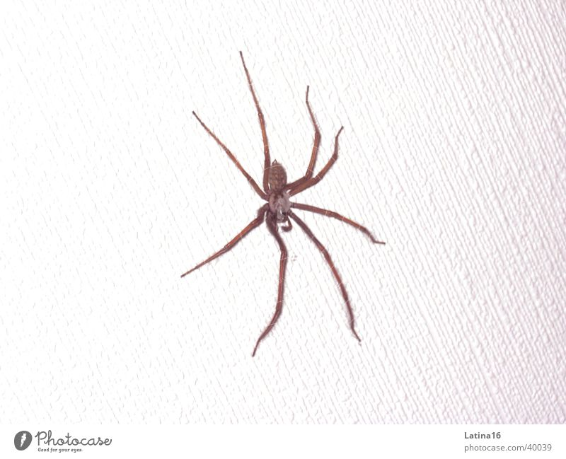 White Black Animal Disgust 8 Spider