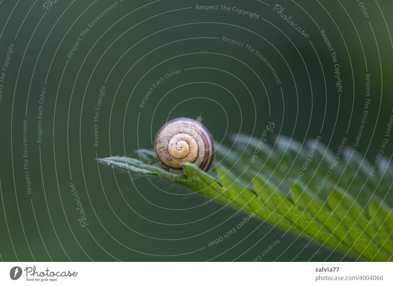 natural forms Forms and structures Nature Structures and shapes Leaf Snail shell Round Spiral serrated Contrast Green Point Small Macro (Extreme close-up)