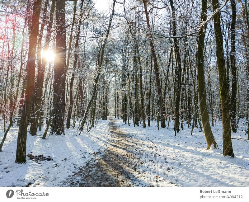 a snowy forest, the sun shines through the trees Forest Snow Winter winter sunshine Frost Ice Window quick-frozen off panorama ice crystals Deciduous forest