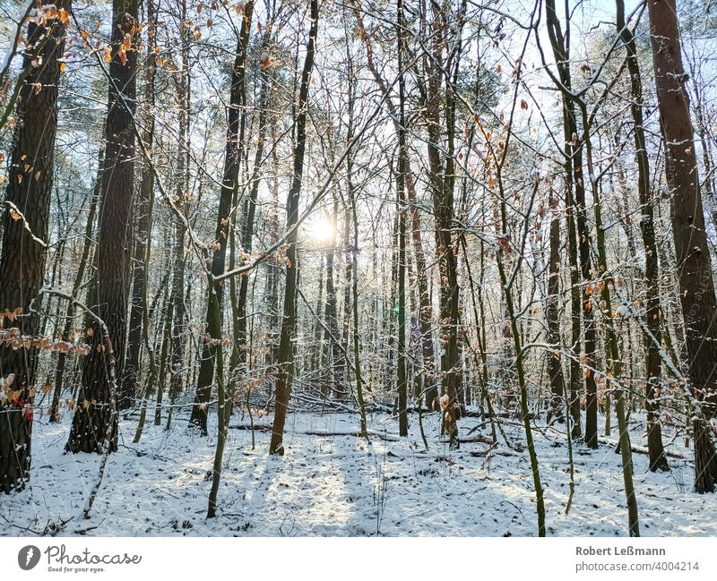 a wintry forest, with a lot of snow Forest Snow Winter trees winter sunshine Frost Ice Window quick-frozen off panorama ice crystals Deciduous forest background