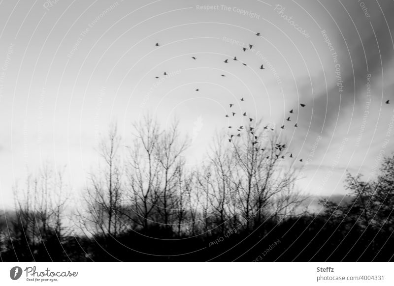 the longing flies with Flight of the birds Birds fly Flock of birds Longing fascination Meaning search for meaning Nordic Freedom Ease melancholy