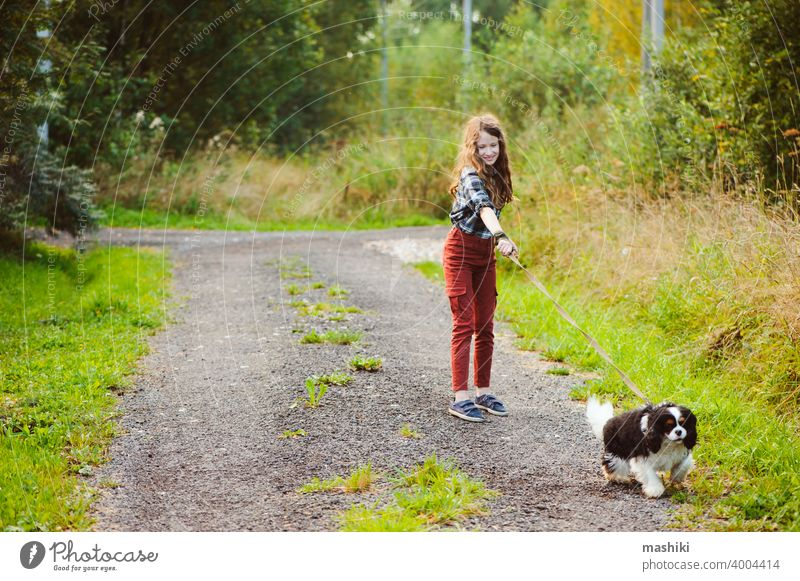happy kid girl walking with her cavalier king charles spaniel dog on summer country road. Training her puppy and having fun. child animal pet nature outdoor