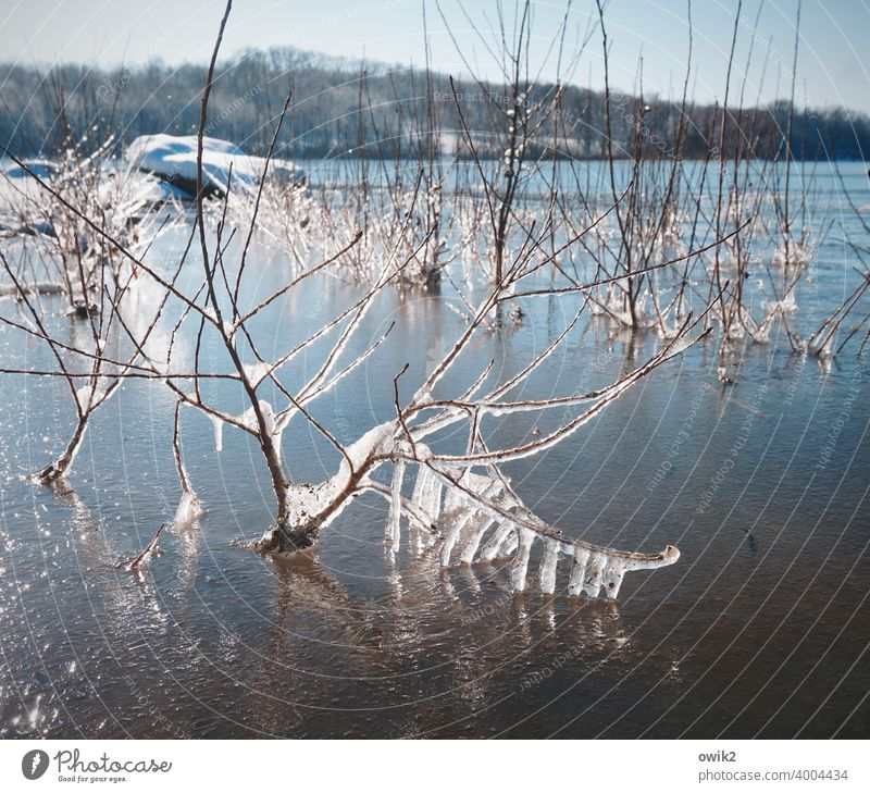 shock-frozen Plant Frozen Ice Frost Wild plant Twig Cold Environment Winter Colour photo Near Detail Structures and shapes Deserted Exterior shot Ice crystal
