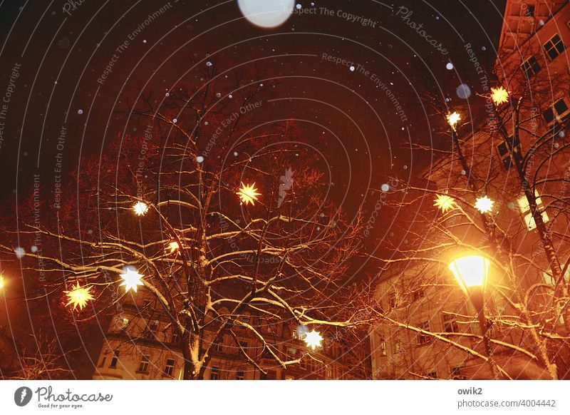 light appearance Twigs and branches Tree Winter Night sky lordnhut stars Christmas star Decoration Stars Plastic Wood Sign Hang Safety (feeling of) Above Bright