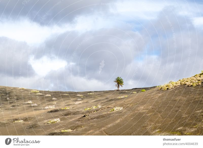 1 tree between the volcanoes Colour photo Target meditative Peak Deserted Tree contemplation Loneliness Panorama (View) Shadow Light Day Exterior shot Moody
