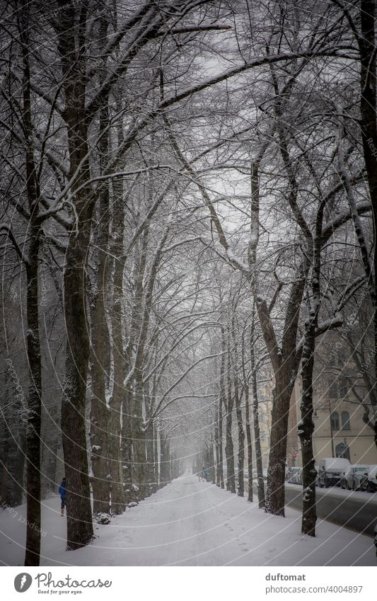Alley with snow covered trees in winter Winter Snow White urban Town Freeze Ice Cold Snowfall Snowflake Exterior shot avenue trees Frost Weather Bad weather