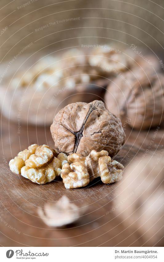 Walnuts on walnut wood . Walnut kernels shell Wooden bowl Nut shallow depth of field Juglans regia Walnut plants Juglandaceae