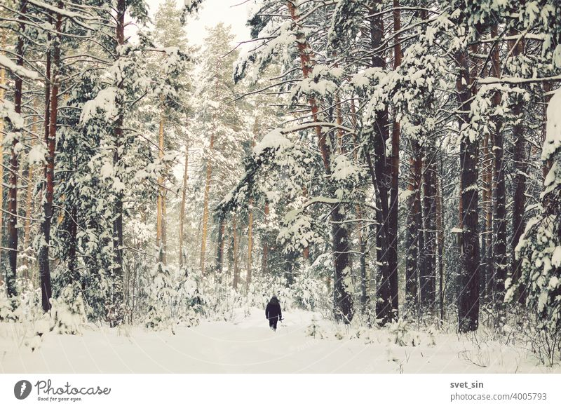 Black small figure of a man with a child on his shoulders walking in a snowy winter pine forest. abstract alone art backdrop background beautiful black branch