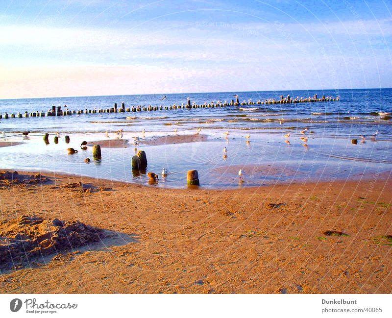 Seagulls by the sea Ocean Beach Transport Baltic Sea Sand seagulls