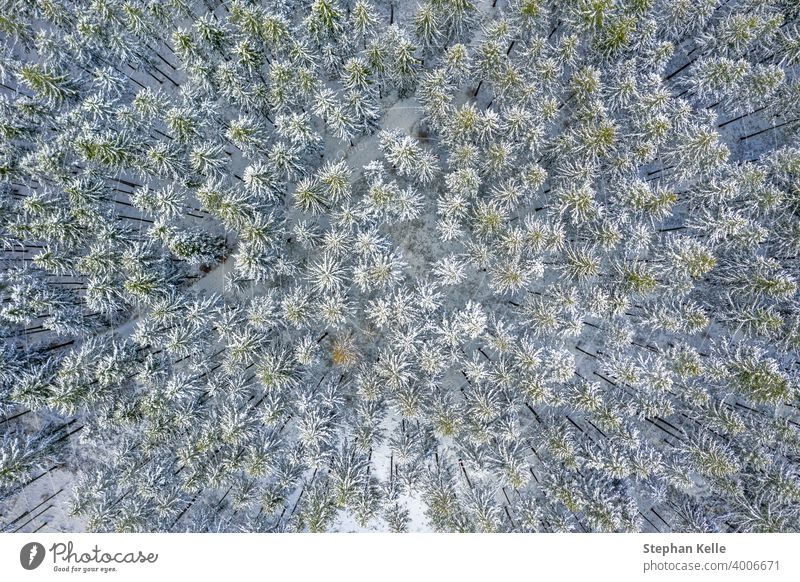 Aerial Drone View of Snow Covered Evergreen Christmas Tree Forest after Snow Blizzard - white beautiful treetops. nature winter snow background top down climate
