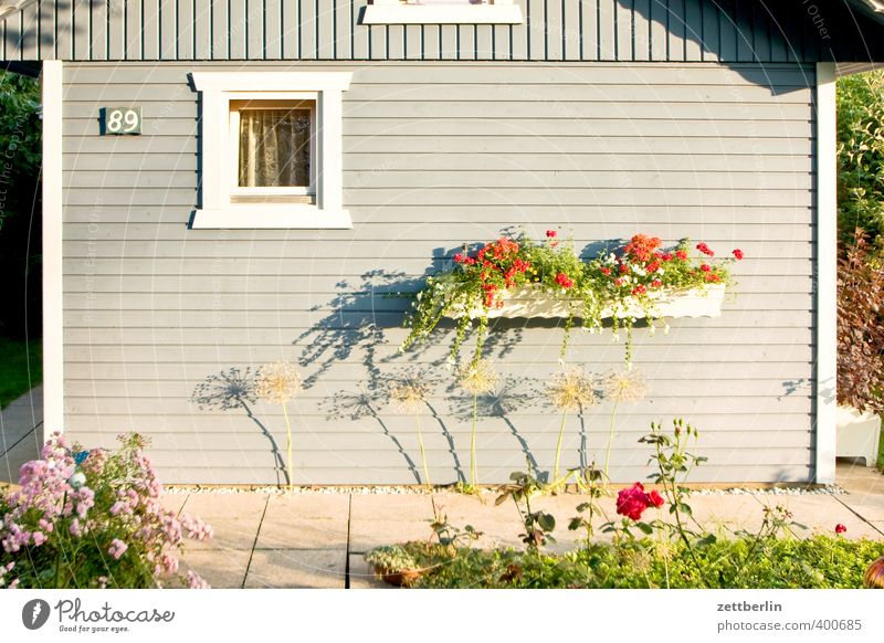 Beautiful Plant Summer Relaxation Calm House (Residential Structure) Window Wall (building) Wall (barrier) Garden Weather Leisure and hobbies Living or residing