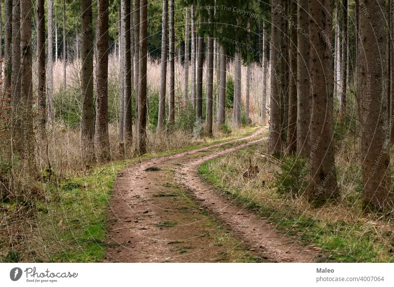 Dirt road in the forest among tall trees green dirt landscape path summer wood bright nature grass autumn leaf rural scenery season way winding sunrise fall