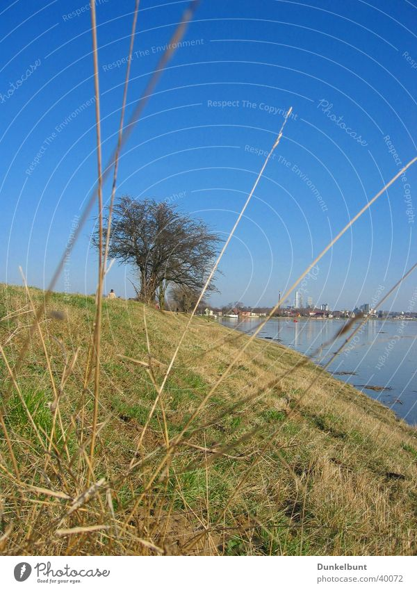 Grass Elbe Slope Flood