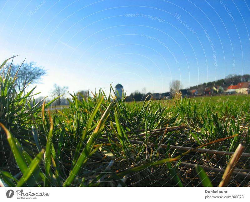 Elbe meadow Meadow Green Grass Mill Flood Elbe elb pastures