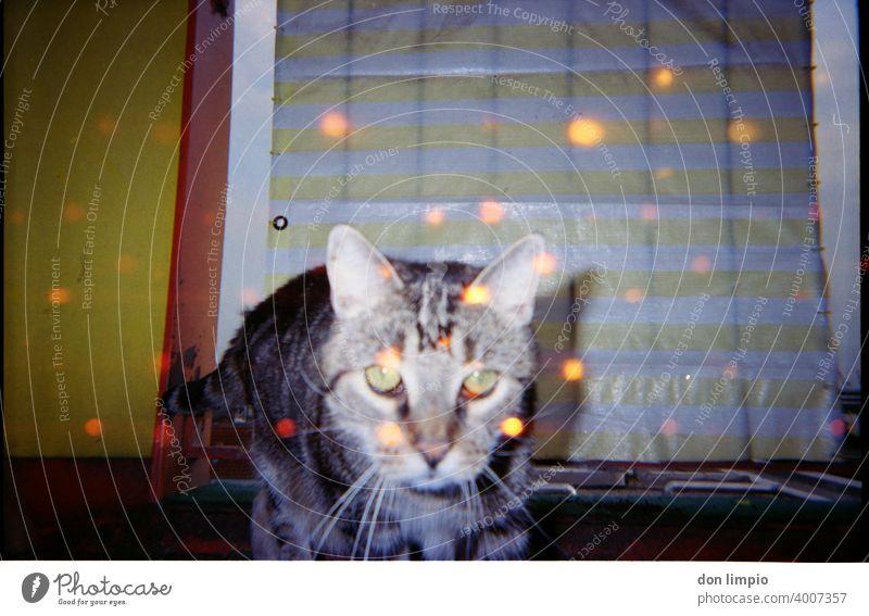 red eye effect Cat trash Retro Colour photo Copy Space top Retro trash