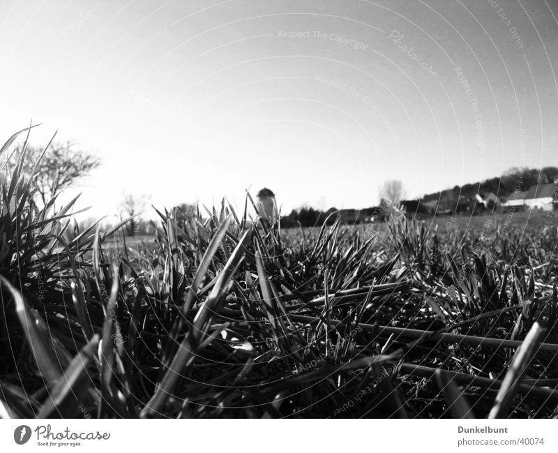 Elbwiesen b/w Meadow Green Grass Mill Flood Elbe elb pastures