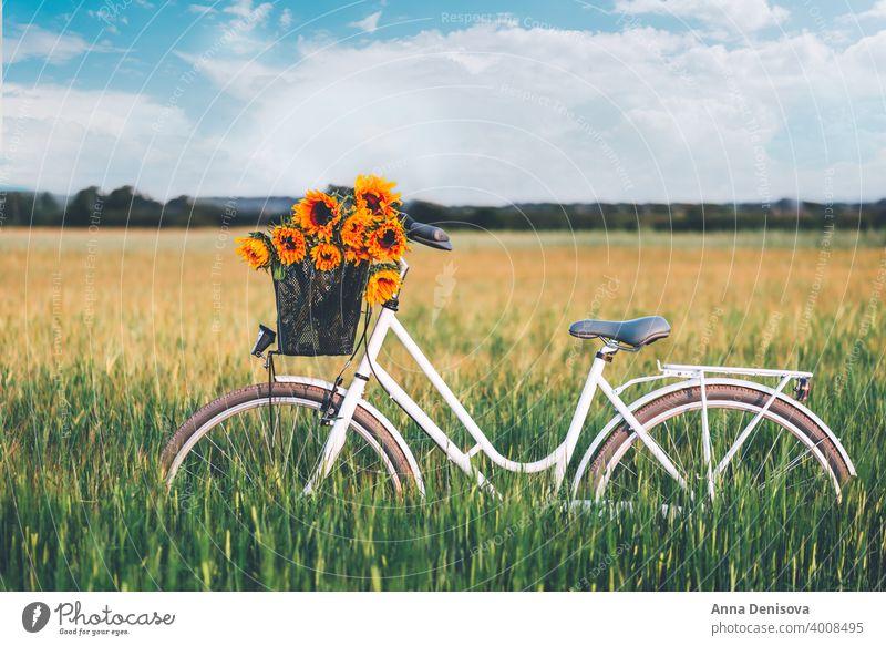 Vintage bicycle with sunflowers basket bike vintage stylish bouquet female retro wheel old romantic womanish england uk europe outside outdoor girly feminine