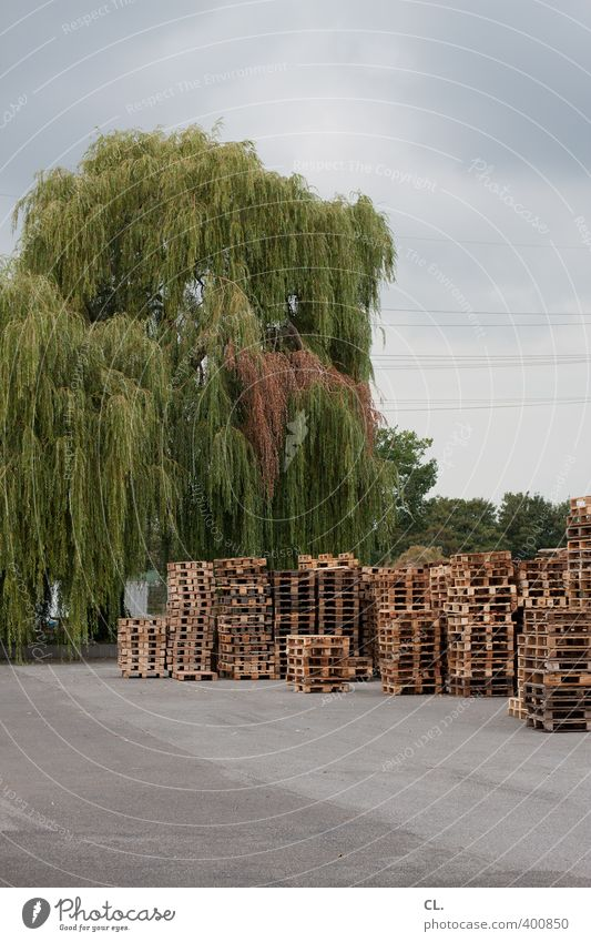 stackable Industry Trade Logistics SME Clouds Bad weather Tree Work and employment Gloomy Diligent Stagnating Growth Palett Weeping willow Stack Asphalt