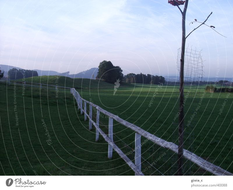 Tree Green Summer Grass Landscape Flat (apartment) Background picture Pasture Fence Clump of trees Salzkammergut Federal State of Upper Austria