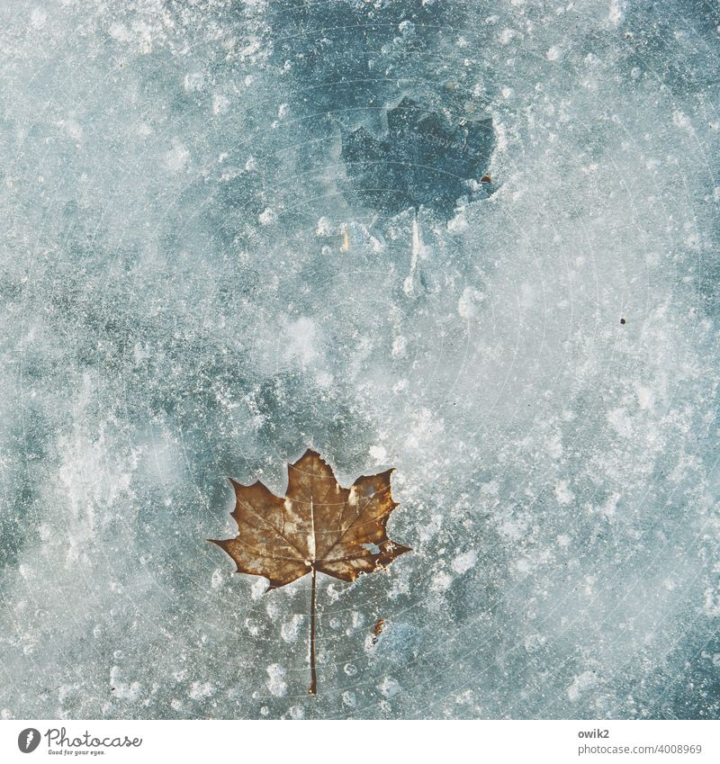 Durable Leaf Winter Solidify Frozen Ice floe Idyll Loneliness Calm Wait Cold Freeze Lake Water Purity Humble Grief Transience Exterior shot Surface of water