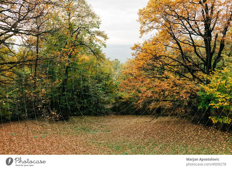 View of the forest in autumn adventure background beautiful beech branch color colorful day environment europe explore fall foliage forestry golden green