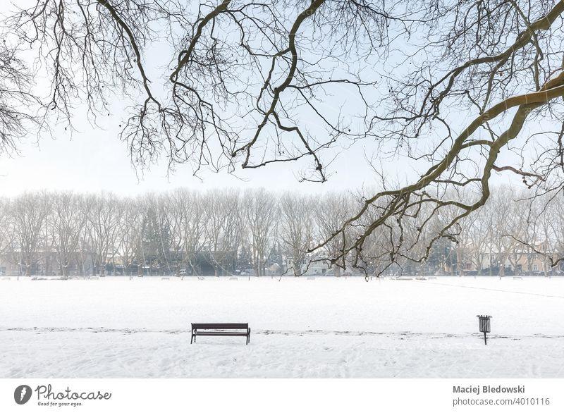 Jan Kasprowicz Park in winter, Szczecin, Poland. park bench white snow cold nobody empty solitude tree