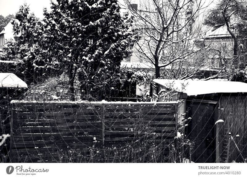 Fine traces of snow in a densely packed suburban garden scene with wooden fence, privacy screen, wooden huts, various fruit and coniferous trees, hedges, pale silhouettes of houses in the background