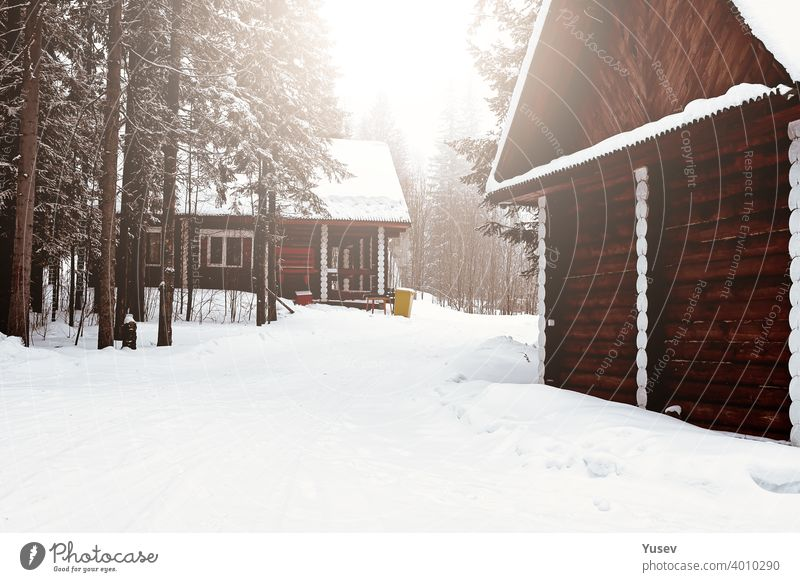 Wooden house between trees in the winter forest. Log cottage. Housing made from natural building materials. Eco-friendly construction. wooden log cabin housing