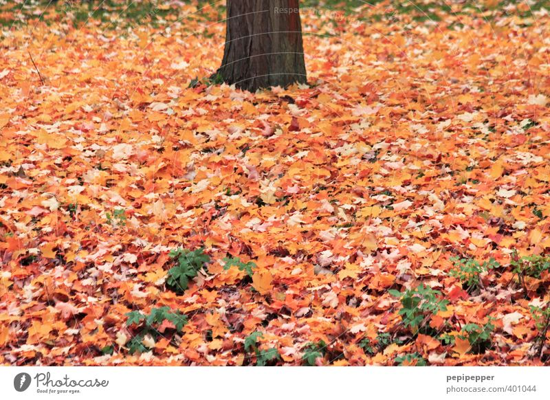 Nature Vacation & Travel Old Plant Tree Leaf Forest Environment Autumn Wood Garden Brown Park Earth Beautiful weather Autumn leaves