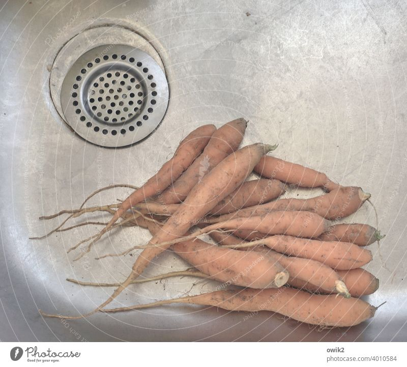 Thick roots carrots Sink Cleaning Wash Kitchen Organic produce Orange food Nutrition food products Vegetable cleaning Colour photo Healthy Eating Interior shot