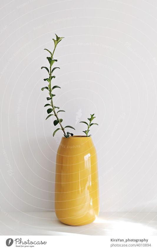 Modern Illuminating yellow vase with plant on white wall still life minimal style glass vase nobody shadow interior light leak modern style illuminating yellow