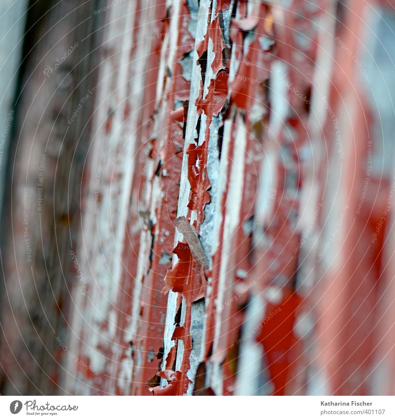 """Foliage."" Wall (barrier) Wall (building) Facade Door Metal Steel Rust Blue Brown Gray Red Black Silver Flake off Old Derelict Decline Cladding Varnish"