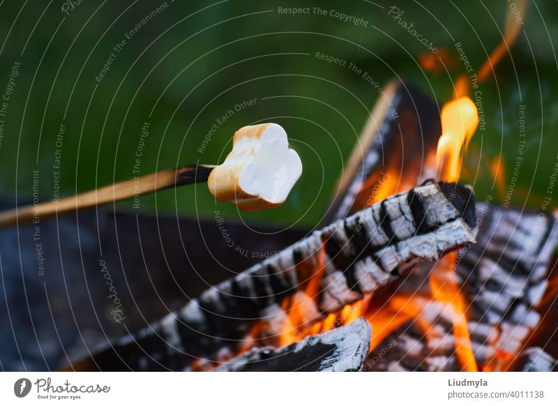 Marshmallow roasting over the fire flames. Marshmallow on skewers roasted on bonfire adventure background barbecue camp campfire candy chewy closeup confection
