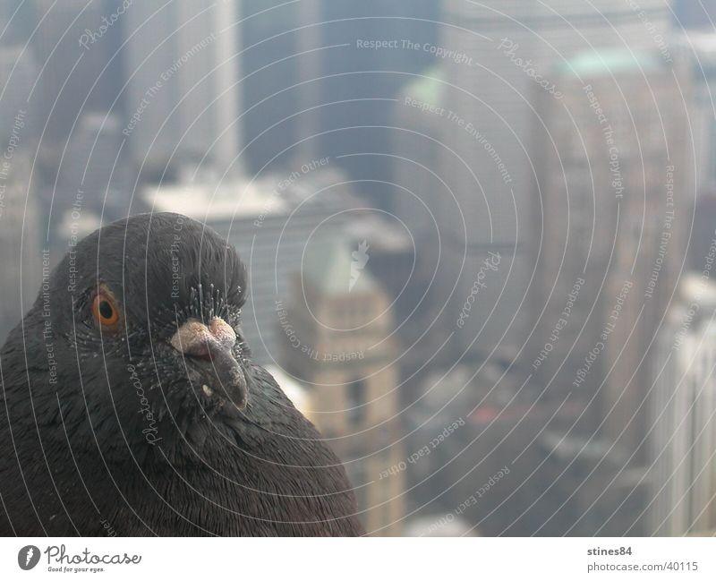 Animal Bird Perspective Vantage point Americas New York City North America