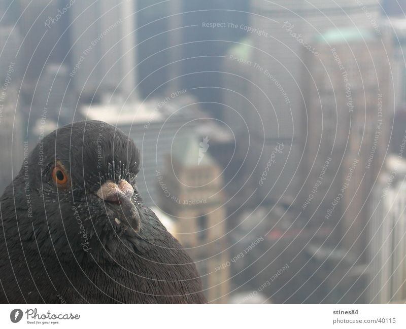 Animal Bird Perspective Vantage point Americas New York City North America