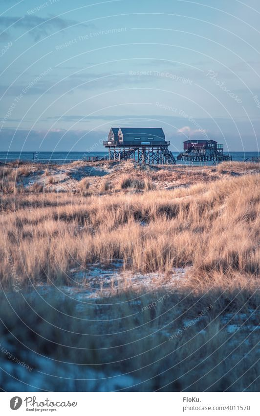 Winter atmosphere in St. Peter-Ording at the North Sea coast Beach dunes Ocean Vacation & Travel Exterior shot Sand Sky Relaxation Landscape Far-off places