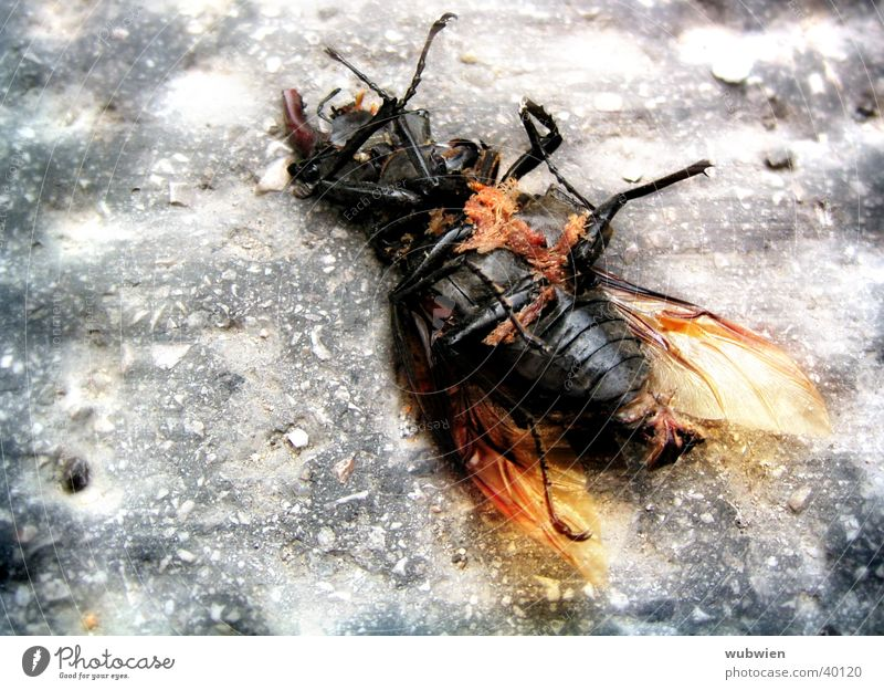 Beetles in the city Tread City life Transport Death Floor covering Lie