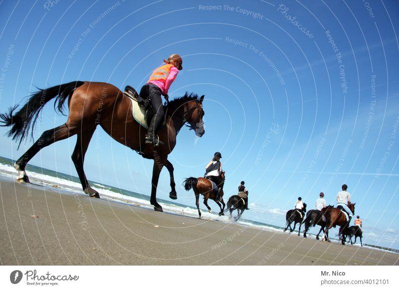 Horseback ride on the beach Ride Adventure Summer Beach Ocean Landscape Nature Environment Equestrian sports Summer vacation Trip Racehorse of the Year