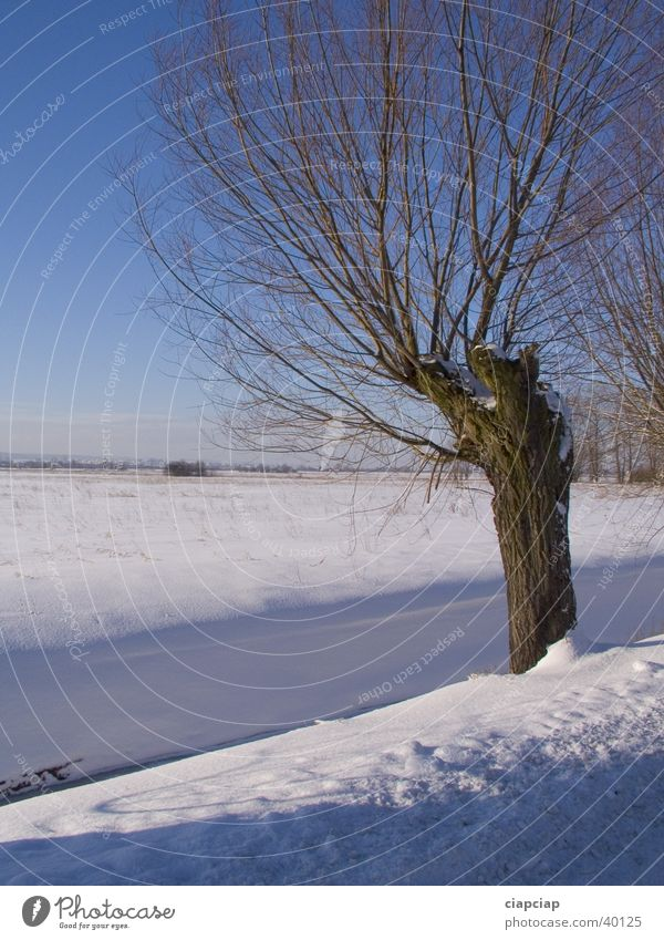 alone tree Winter Snow Sun