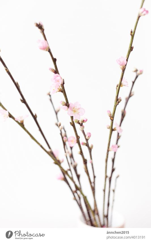 Branches with pink flowers blossoms Spring Easter Nature Colour photo Deserted pretty Blossom Garden naturally Blossoming Decoration Spring fever Detail Pink