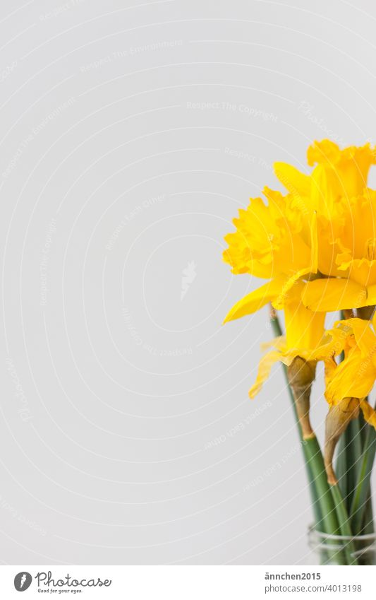 At the right edge of the picture you can see a bouquet of yellow daffodils Easter Spring Colour photo Nature Plant Feasts & Celebrations Leaf Bouquet Decoration