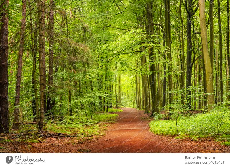 A spring walk in a forest near Berlin Forest Spring Book spruces off To go for a walk Deserted Landscape Exterior shot Tree Nature Environment Colour photo