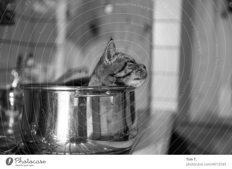 the hangover relaxes in the pot Cat Kitchen Pot relaxation Animal Domestic cat Cute Animal face Whisker Cuddly Pet Animal portrait Cat's head Pelt Snout Sleep