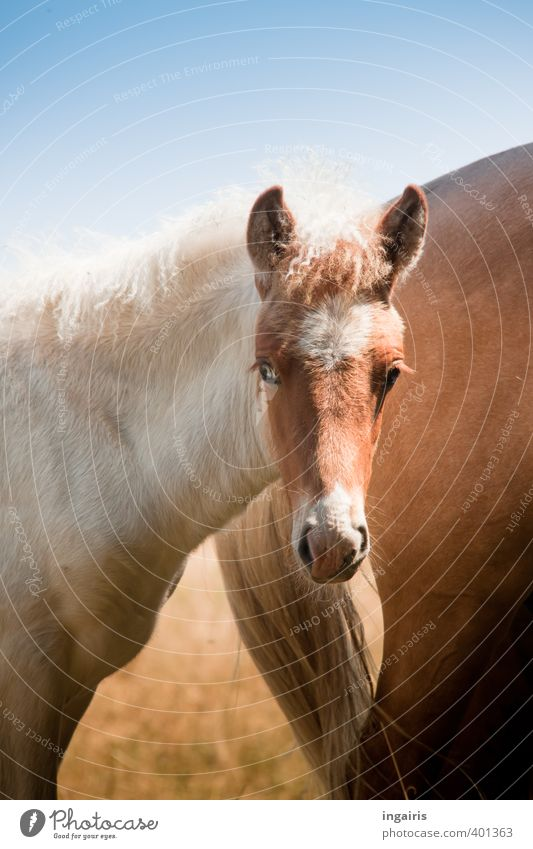 Nature Blue White Animal Eyes Baby animal Small Brown Observe Horse Pasture Animal face Trust Pony Farm animal Sympathy