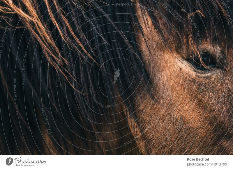 Horse vision Horse's eyes Close-up Brown Mane Eyes Animal portrait Looking Horse's head Animal face