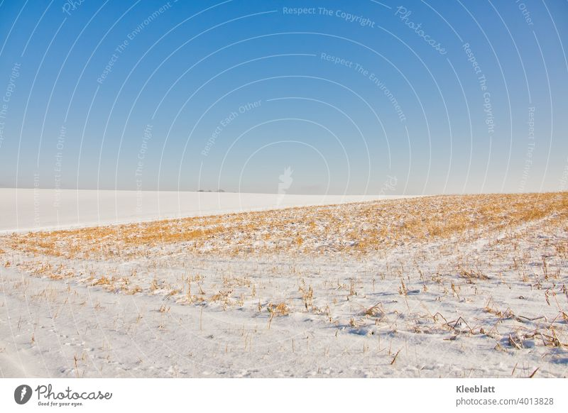 Winter in the field. Bare stubble fields with snow cover and deep blue winter sky Bare Fields Cold Snow Exterior shot Landscape Nature Deserted Environment