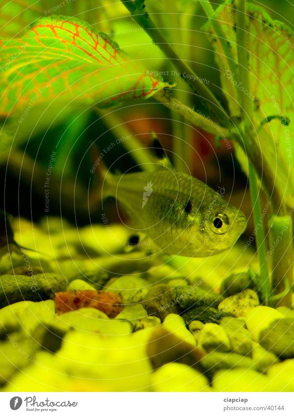 Water Green Aquarium