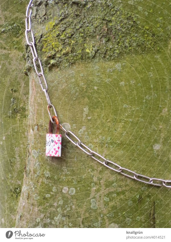 Love lock on a chain looped around a tree Love padlock old tree Romance Exterior shot Loyalty Padlock Infatuation rusty Tree trunk Colour photo Chain Emotions